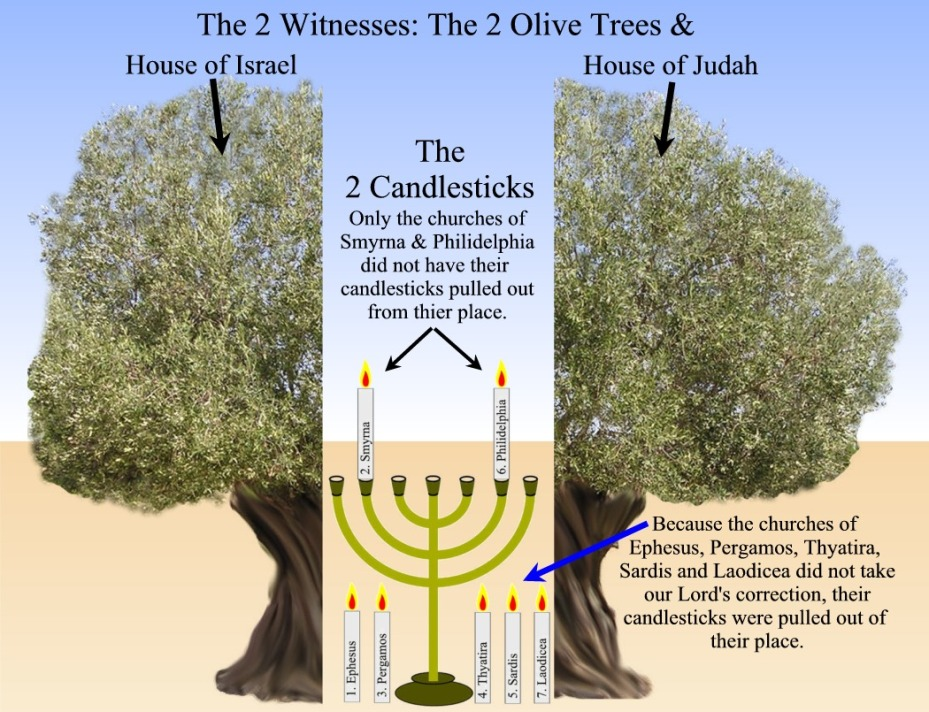30 Olive Trees - Menora